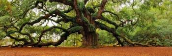arbre fabienne